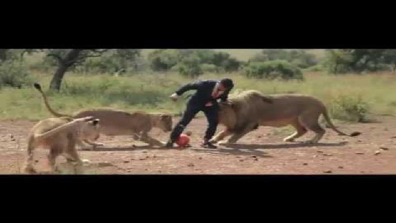 Voetballen met leeuwen