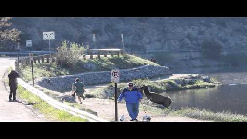 VIDEO: eland achtervolgt jogger
