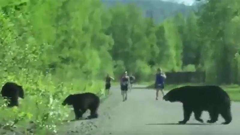 Beren komen terecht op parcours van loopwedstrijd (video)