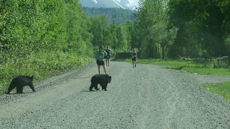 Beren kruisen pad van triatleten (VIDEO)