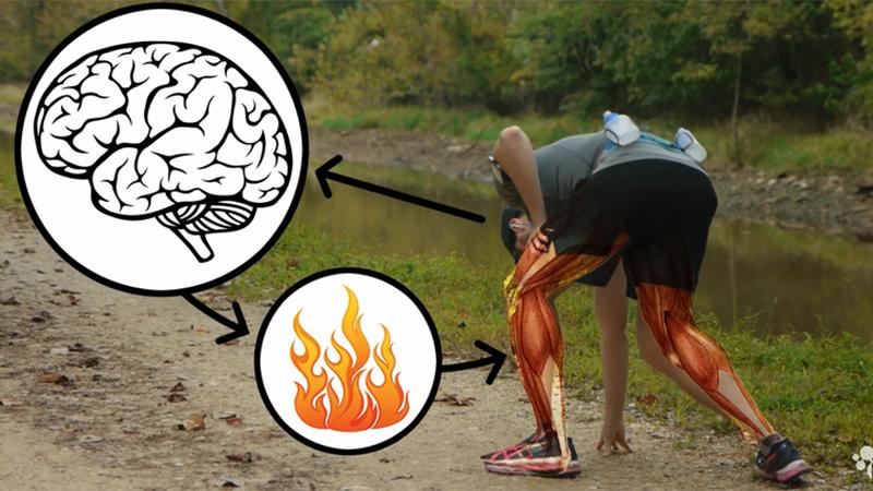 Filmpje toont wat er met je lichaam gebeurt tijdens het lopen