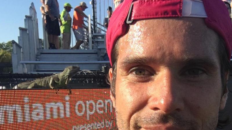 Un iguane assure le spectacle à Miami (VIDEO)
