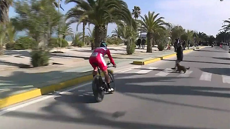 Sagan évite de justesse un chien en promenade (VIDEO)