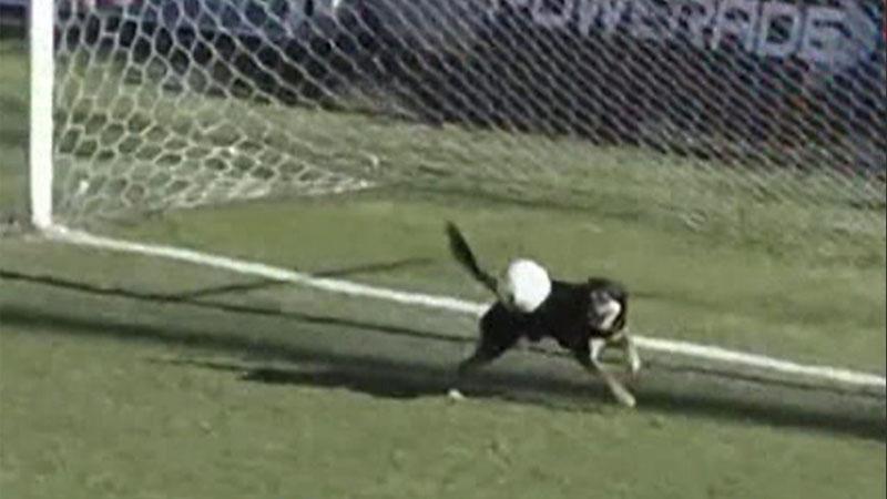 Hond springt doelman te hulp (VIDEO)