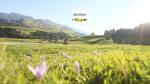 Seiser Alm: Italiaans Alpengevoel in Zuid-Tirol