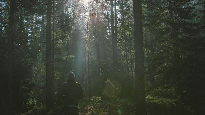 5 redenen om in de natuur te gaan lopen