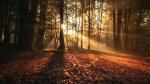 5 raisons d'aller courir dans les bois