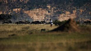 Marathon tussen de wilde beesten