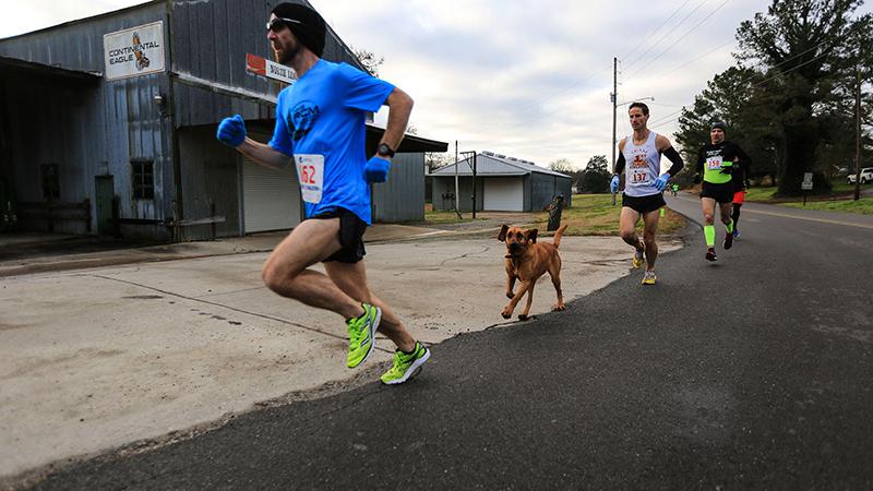 Hond loopt per ongeluk halve marathon